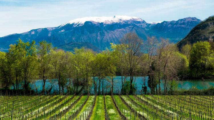 I Vini e i Vigneti della Lombardia