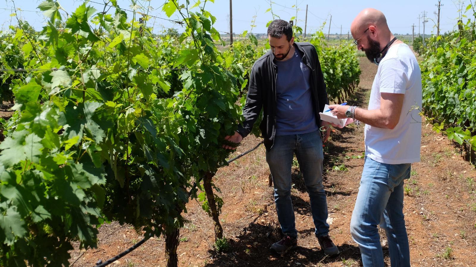 Chiacchiere con i produttori: Marco Ludovico Enoartigiano in terra delle Gravine
